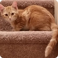 Adopt A Pet :: Ruby - Denton, TX