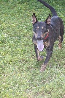Bull Terrier Mix Dog for adoption in Pompano Beach, Florida - Grace