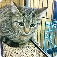 Adopt A Pet :: Kango - Hamilton, ON