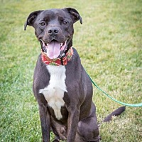 Adopt A Pet :: Clyde - San Diego, CA