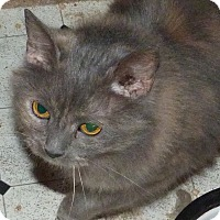 Adopt A Pet :: Izzy - Torti - Stafford, VA