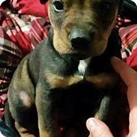 Adopt A Pet :: Legend - Kimberton, PA