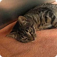 Adopt A Pet :: BAY - Rockford, IL
