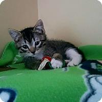 Adopt A Pet :: Marvin - Woodland Hills, CA
