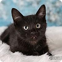Adopt A Pet :: Ollie - Eagan, MN