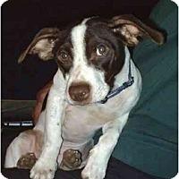 Adopt A Pet :: squirt - cedar grove, IN