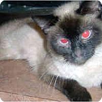 Adopt A Pet :: Pam - Jacksonville, FL
