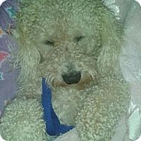 Adopt A Pet :: Boo Boo - Acushnet, MA