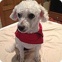 Adopt A Pet :: Rocky - Essex Junction, VT