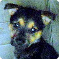 Adopt A Pet :: Baby Zoe - Oakley, CA