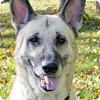 Adopt A Pet :: Pearl - Indianapolis, IN