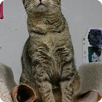 Adopt A Pet :: Jo - Phoenix, AZ