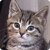 Adopt A Pet :: Keanu - Irvine, CA