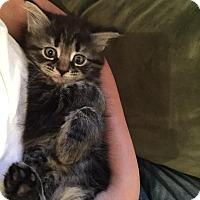 Adopt A Pet :: MUFFY aka ZOE - Hamilton, NJ