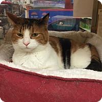 Adopt A Pet :: Sunshine - Monroe, GA