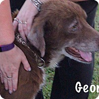 Adopt A Pet :: George - Chillicothe, OH