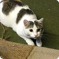 Adopt A Pet :: Sweet Pea - Butner, NC