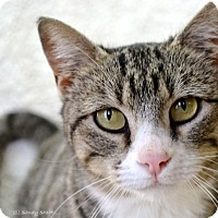 Adopt A Pet :: Pearly (arriving 3/24) - Manchester, CT