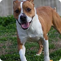 Adopt A Pet :: Allen - Evansville, IN