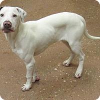 Adopt A Pet :: Fred *Petsmart GB* - Appleton, WI