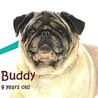 Adopt A Pet :: Buddy - Hinckley, MN