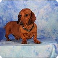 Adopt A Pet :: Ellen - Ft. Myers, FL