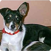 Adopt A Pet :: Lightning - dewey, AZ
