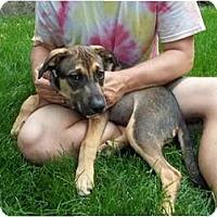 Adopt A Pet :: Susie (pending adoption) - Adamsville, TN