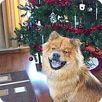 Adopt A Pet :: Mia - Tillsonburg, ON