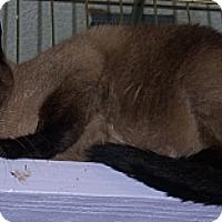 Adopt A Pet :: DC - Whittier, CA