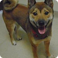 Adopt A Pet :: Luka - Gary, IN