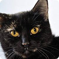 Adopt A Pet :: Luna - Griffin, GA