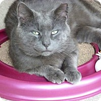 Adopt A Pet :: Smokey - Westwood, NJ