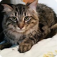 Adopt A Pet :: Hans - Modesto, CA