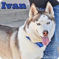 Adopt A Pet :: Ivan - Carrollton, TX