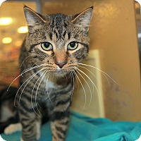 Adopt A Pet :: Rolette - Rochester, MN