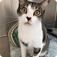 Adopt A Pet :: Racer - Umatilla, FL