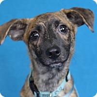 Adopt A Pet :: Webber - Minneapolis, MN