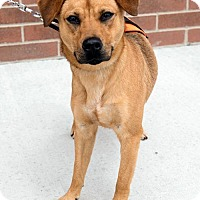 Adopt A Pet :: Taz - Franklin, IN