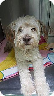 Adopt A Pet :: Klark  - Renton, WA