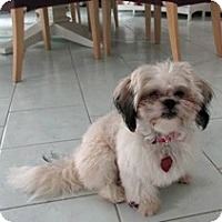 Adopt A Pet :: Evie - Framingham, MA