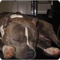Adopt A Pet :: Tank - Brewster, NY