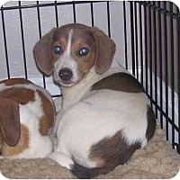 Adopt A Pet :: Trinity - Chandler, IN