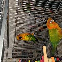 Adopt A Pet :: Brandy & Squeege - Punta Gorda, FL
