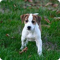 Adopt A Pet :: Maycee - Morgantown, WV