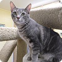 Adopt A Pet :: Conrad - Lake Charles, LA