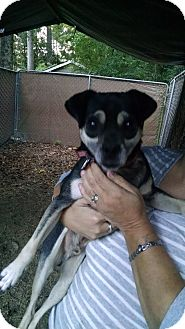 Miniature Pinscher/Pug Mix Dog for adoption in Macon, Georgia - Dexter