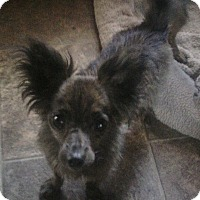 Adopt A Pet :: Mike - Los Angeles, CA