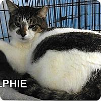 Adopt A Pet :: Ralphie - Medway, MA