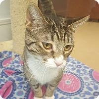 Adopt A Pet :: C3P0 - Gadsden, AL
